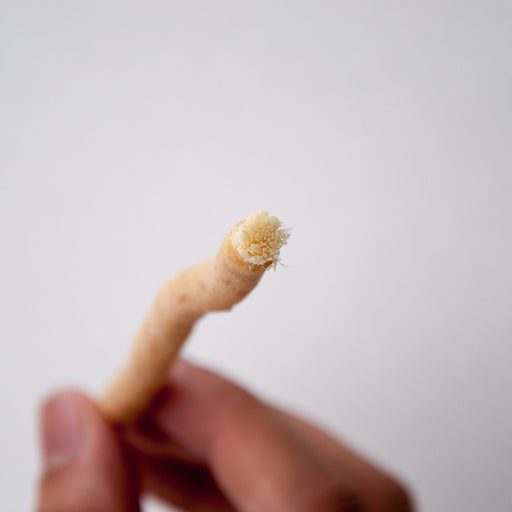 Miswak organic tooth brush sourced from Pakistan - Nadeef