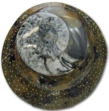 Sculpted Ammonite 01