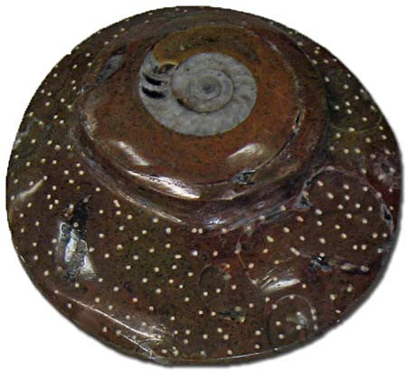 Sculpted Ammonite 02