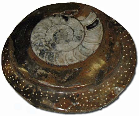 Sculpted Ammonite 05