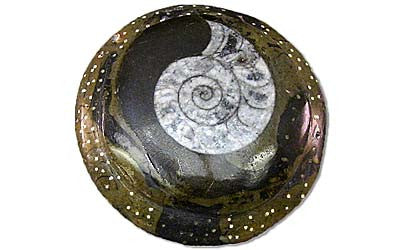 Sculpted Ammonite 04