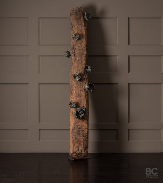Funghi Hook Collection on Antique Beam