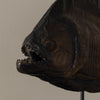 BC Workshop BRONZE PIRANHA ON STAND