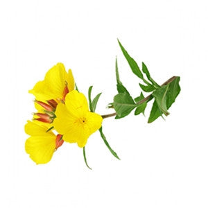 Evening Primrose Oil 100ml - Health Emporium