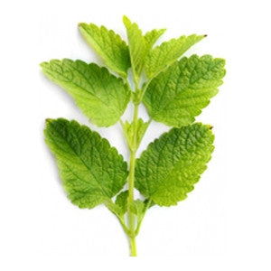 Melissa Lemon Balm Essential Oil 10ml - Health Emporium