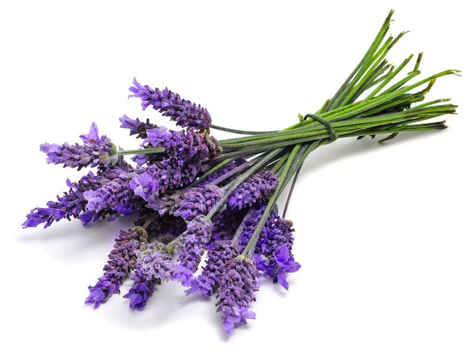 Lavender Essential Oil 30ML - SyraSkins