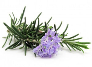Rosemary Essential Oil - 150ML - SyraSkins Pte. Ltd.