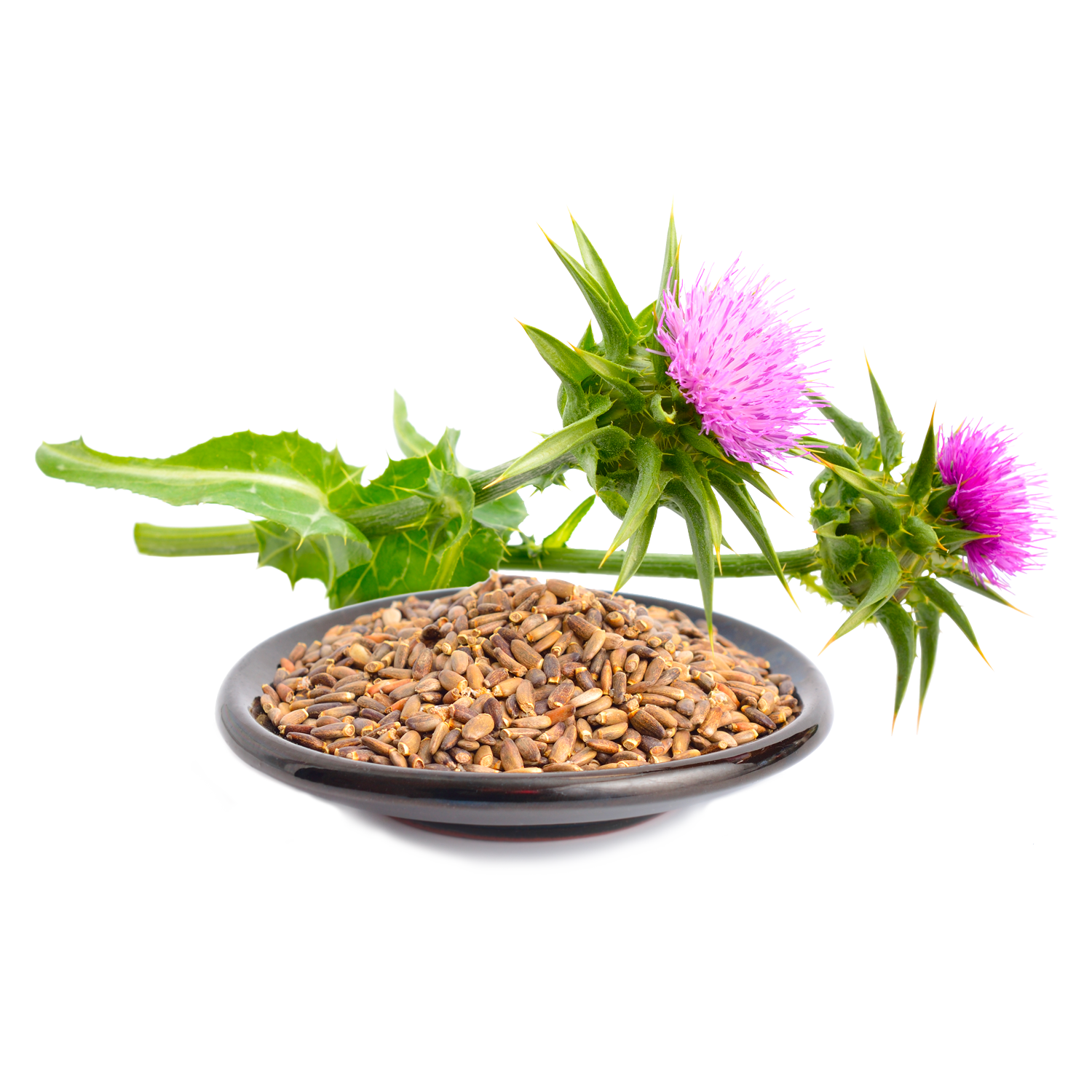 Organic Milk Thistle Seed Extract