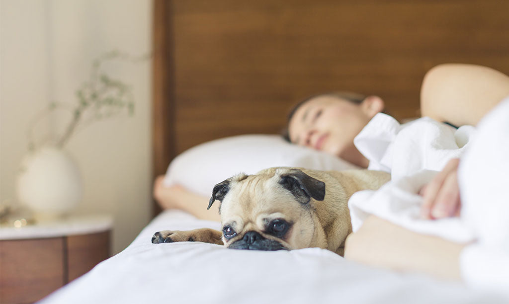 Why Am I So Tired All the Time? How to Get Rid of Sleepiness