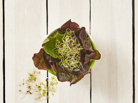 Mixed Leaf Pot | Salad Days Online