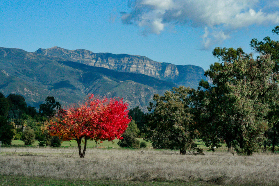 "Terri Laine Topa Mountain Photograph from ""Our Ojai"""