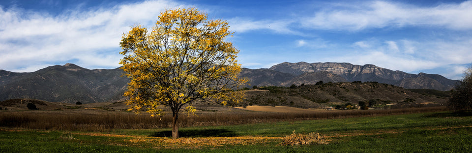 "Fred Rothenberg Fall Tree Photograph from ""Our Ojai"""