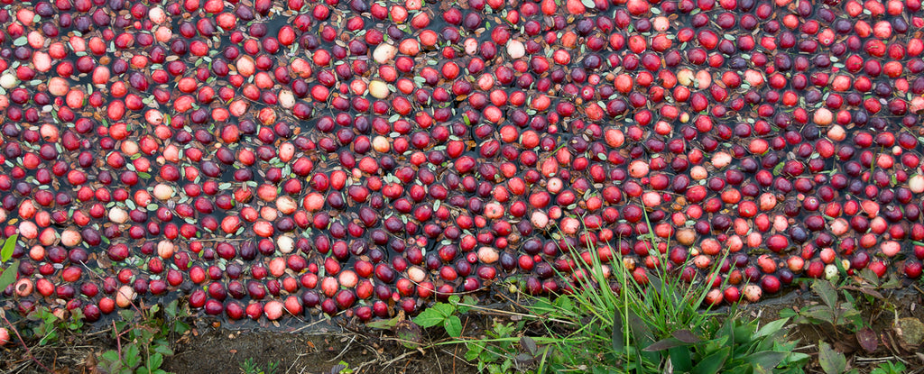 Meet Our Cranberry Supplier: Decas Cranberry