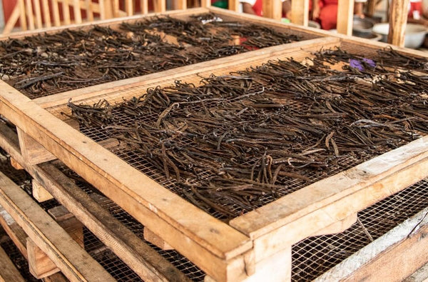 drying vanilla beans in madagascar