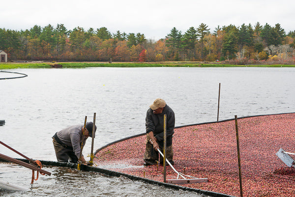 New England Cranberry Supplier