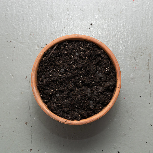 pot filled with soil