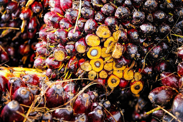 palm oil and palm kernel oil from Indonesia