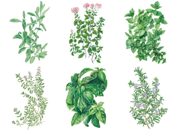 best herbs for beginners