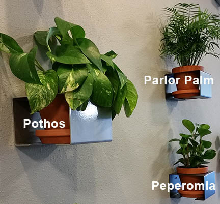 3 Low Light Plants for Your Wall Planter