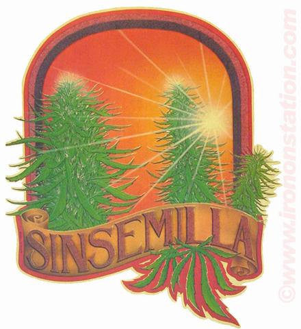 SINSEMILLA MARIJUANA Pot Buds Theme in glitter drugs 70s Vintage Iron On tee shirt transfer Original Authentic