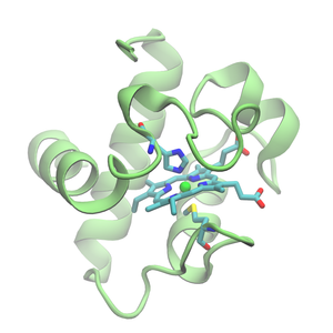 Structure of Cytochrome C6 from Chlamydomonas reinhardtti (PDB:1cyj)