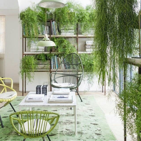 Home decor green plants and rug bohemian style