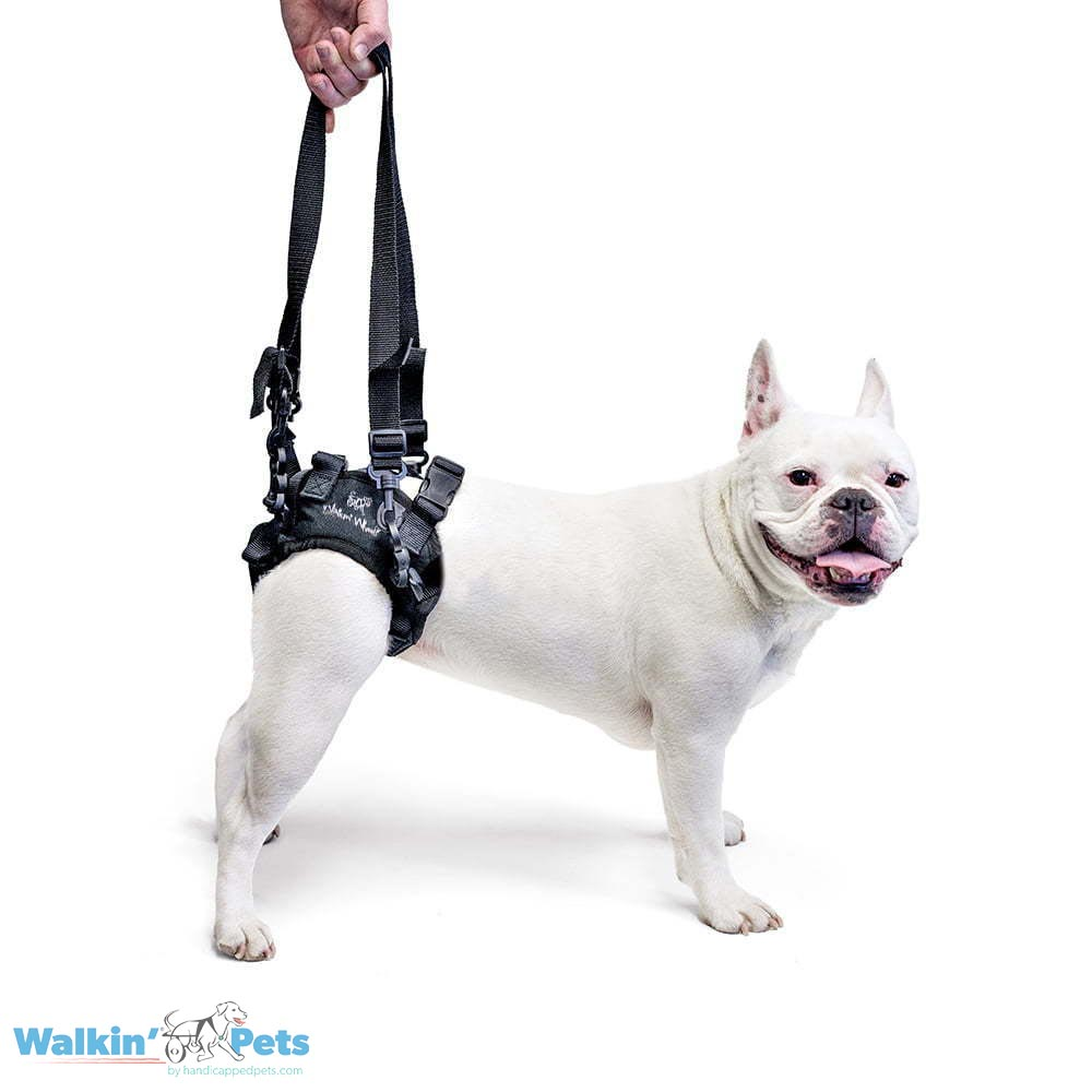 Walkn' Pets Lift Rear Harness