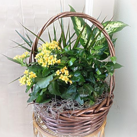 Assorted Green Planter