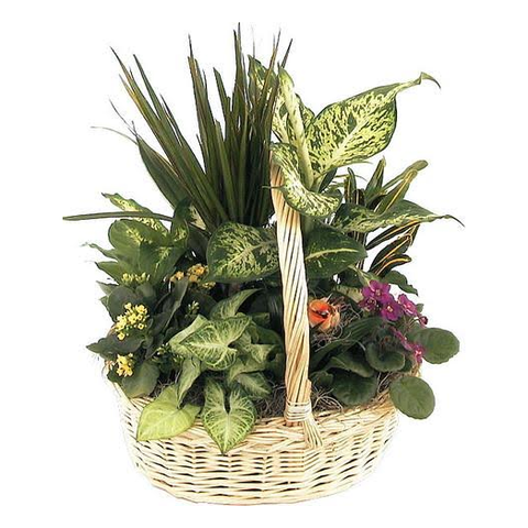 Beautiful European Planter Basket