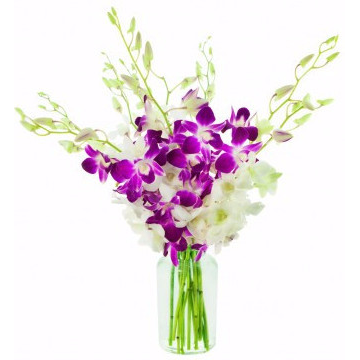 Dendrobium Beauty Arrangement