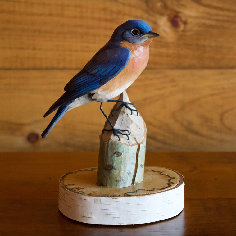 Eastern Bluebird by Allen Aardsma