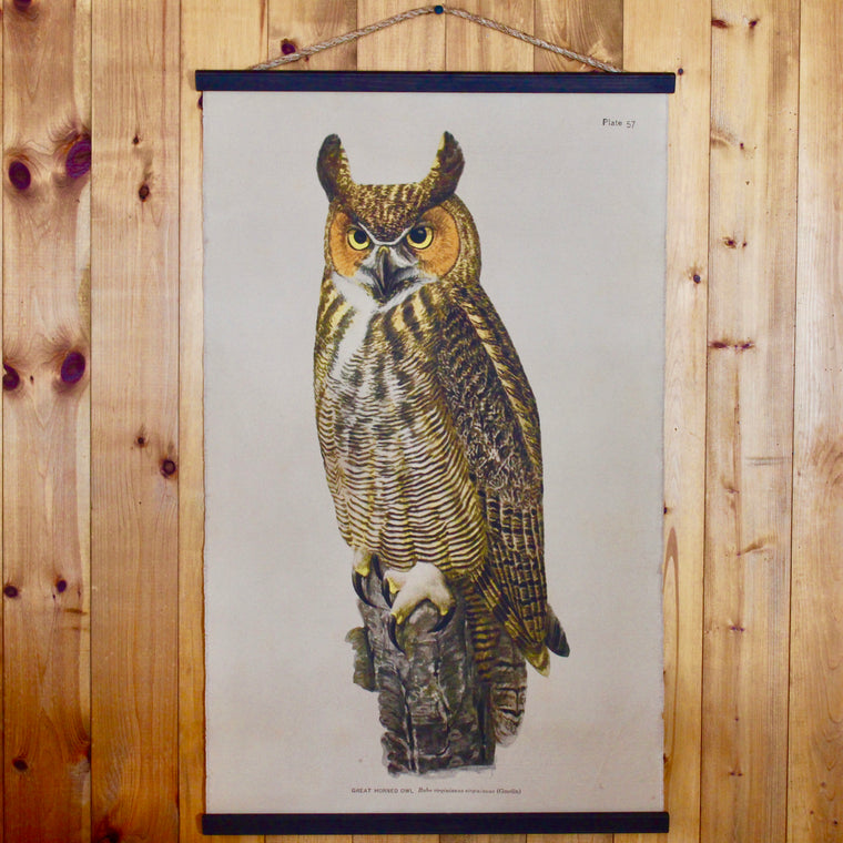 Great Horned Owl Wall Chart