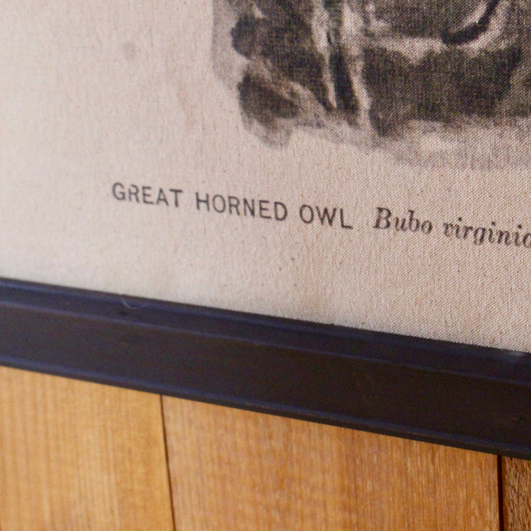 Great Horned Owl Wall Canvas