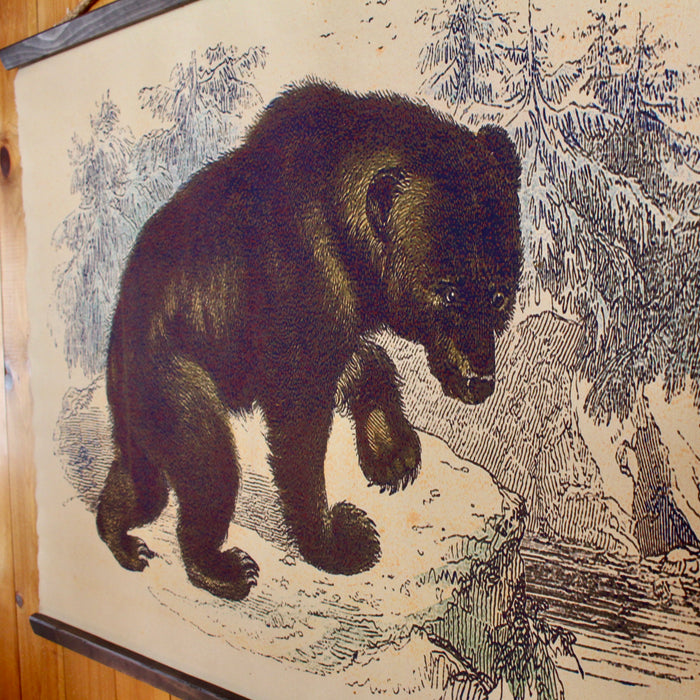 Grizzly Bear Wall Canvas