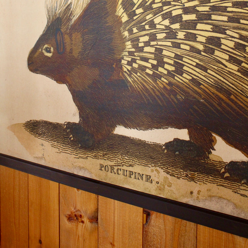 Porcupine wall canvas
