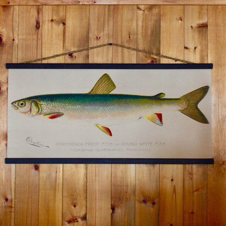 Denton Fish Wall Chart