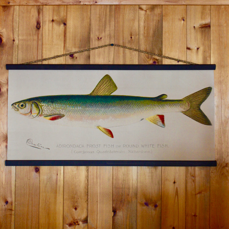 Adirondack Frost Fish on a wall canvas