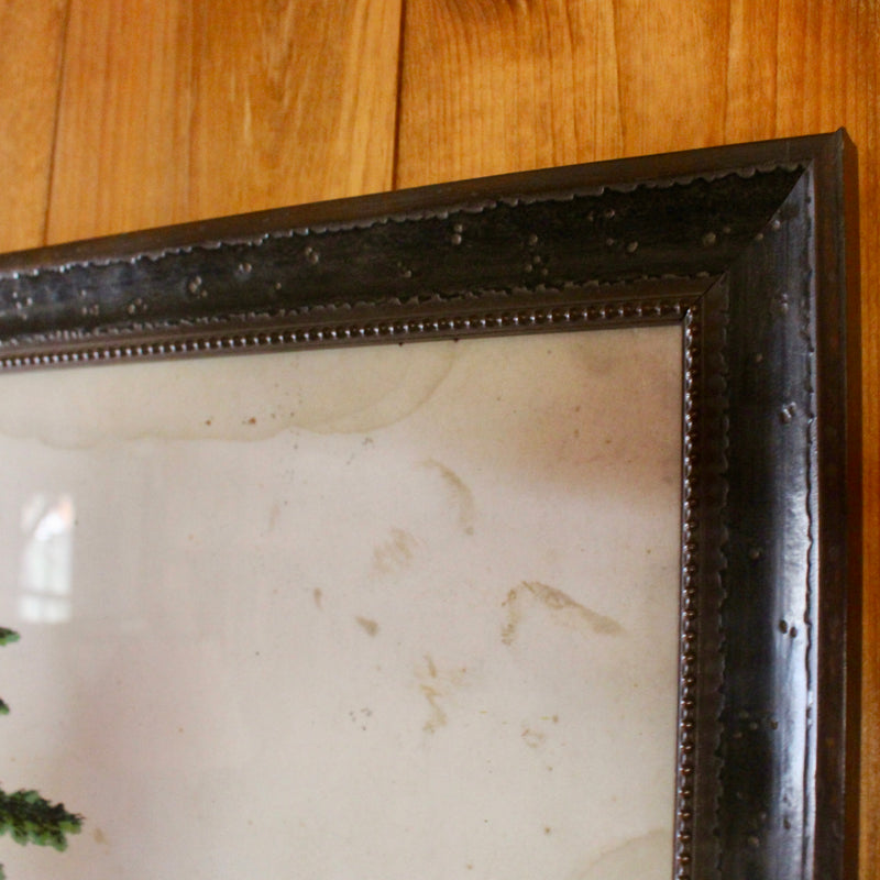 Framed Norway Spruce Print