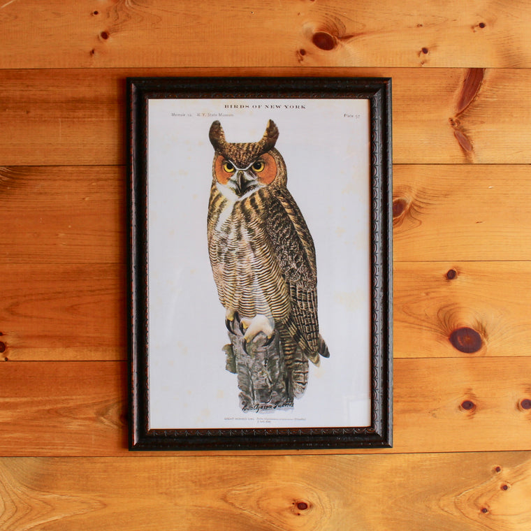Birds of N.Y. Owl Print in Custom Frame