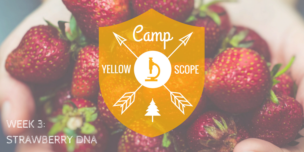 Strawberry DNA | Camp Yellow Scope