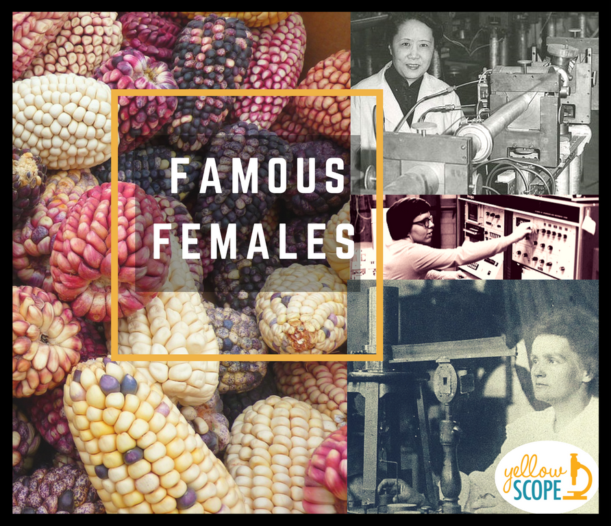 famous females logo | Yellow Scope blog