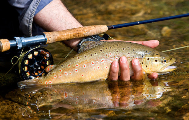 Spring Trout on the Fly Rod