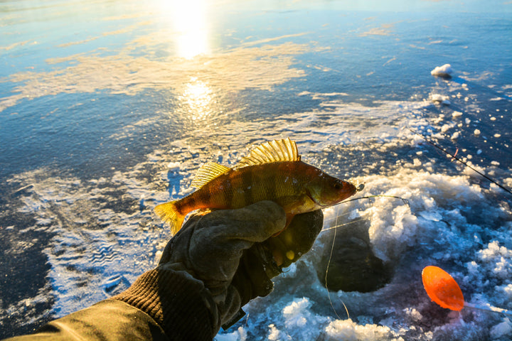 Ice Fishing and catching a perch