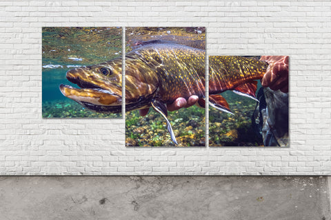 Brook Trout Triptych - Offset