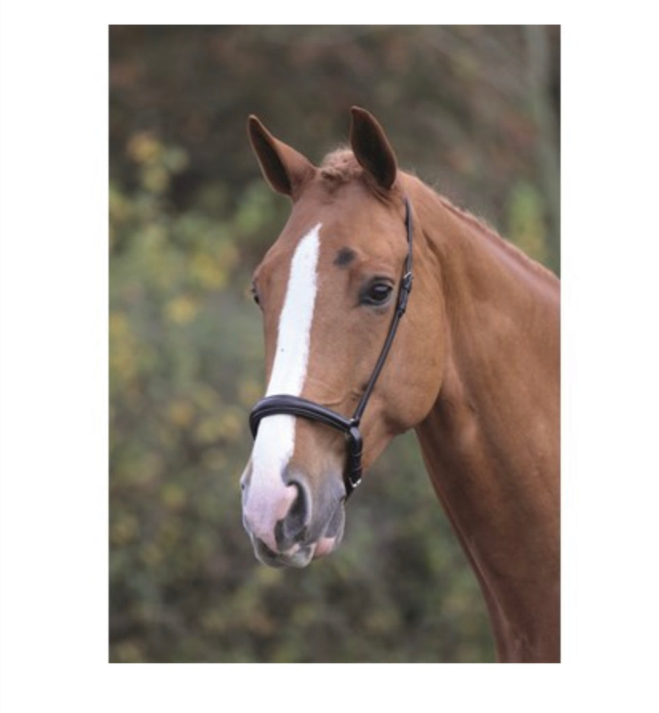 Shires Blenheim padded drop noseband only £6.99 each
