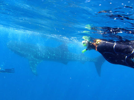 RESTOKE Ambassador Jodi Leafer scuba diving with whale shark
