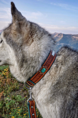 The Bondurant Leather Dog Collar // Loki the Wolfdog
