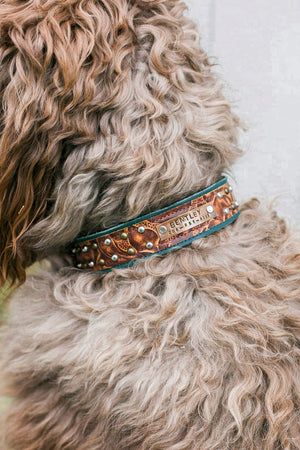 The Ashford Leather Dog Collar