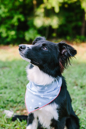 The Americana Dog Bandana
