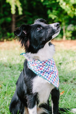 The Tusti Dog Bandana